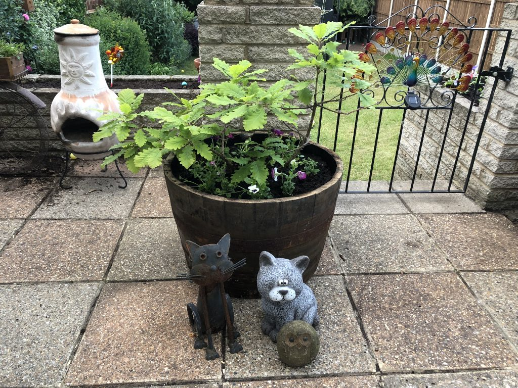 Half oak Whiskey Barrel Planter with Panzies in Garden