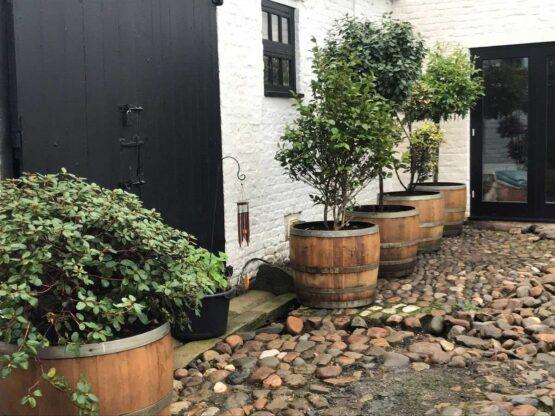 3/4 Wine Oak Barrel Planters for Trees