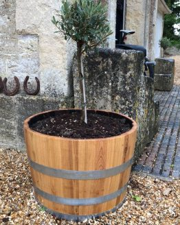 In Situ Chestnut Hardwood Barrel Planter
