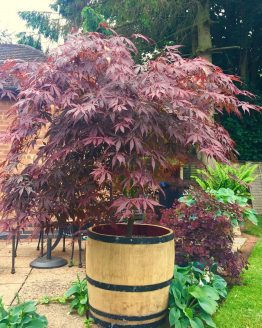 3/4 Size Wine Barrel Planter