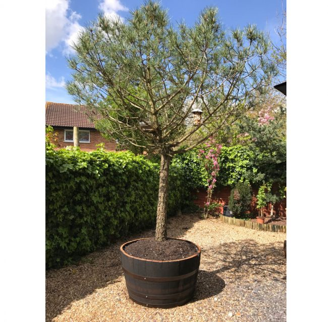 garden planters railway sleepers with Oak Whiskey Half Barrel Planters on Stonecraft Paving Slabs Textured Buff also Cheap Paving Slabs Riven Black 450 X 450mm in addition Natural Granite Paving Dark Grey Patio Pack furthermore Planter Box also Square Floating Oak Coffee Table.