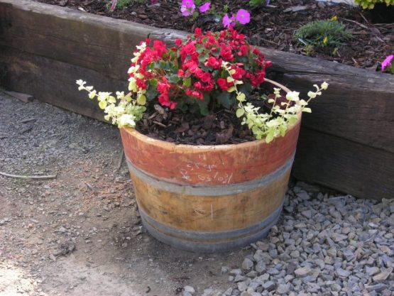 Half Wine Oak Barrel Planters with Red Flowers and Bark