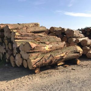 Western Red Cedar for External Cladding use