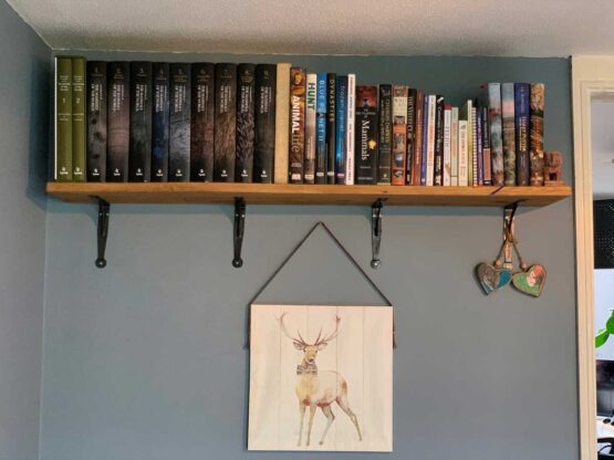 Oak Shelves with penny End Bracket Supports