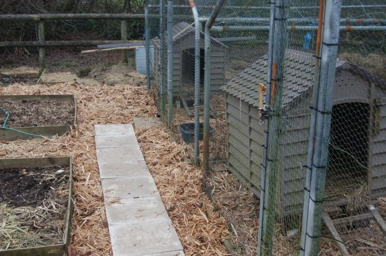 Woodchip Animal Bedding Pembrokeshire West Wales Ducks